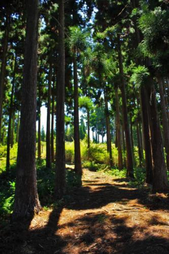 Forêt du Tévelave